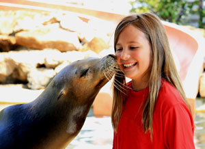 Sea Lion Kiss
