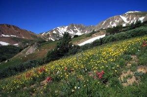 Wildflowers in Herman Gulch